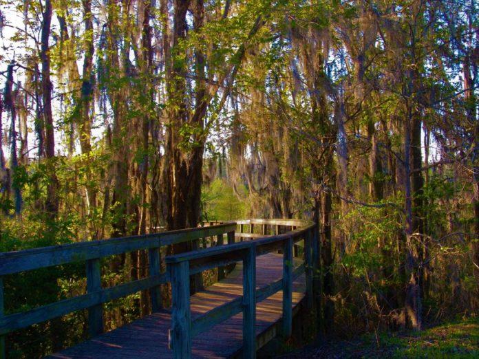 Phinizy Swamp Nature Park Augusta GA