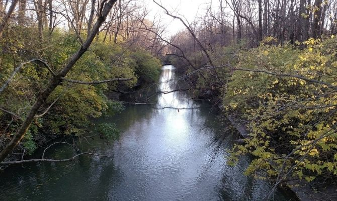 Busey Woods Champaign IL