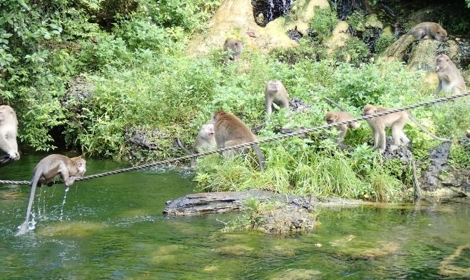 Things to Do in Miami Monkey Jungle