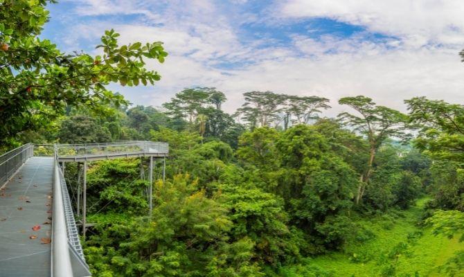 Southern Ridges Walking Trail Singapore