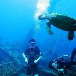 Zeeschildpad bij USS Leberty shipwreck