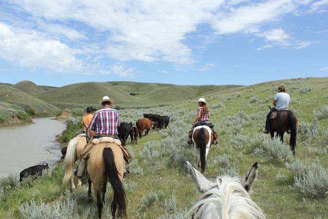 Herding cows at La Reata Ranch