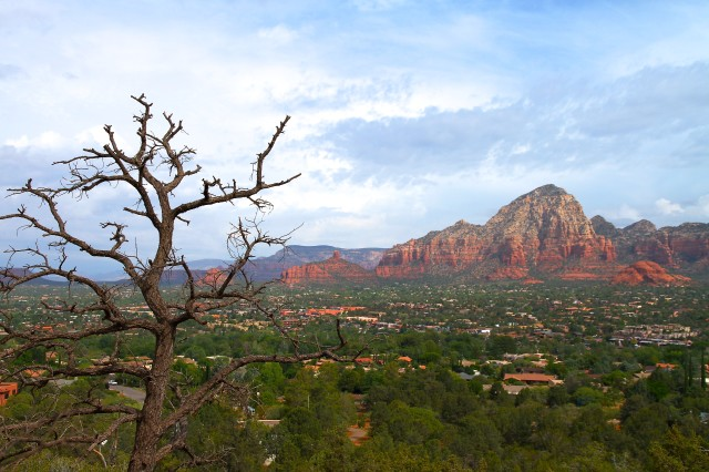Dead Tree and Thunder Mountain, Sedona, Arizona