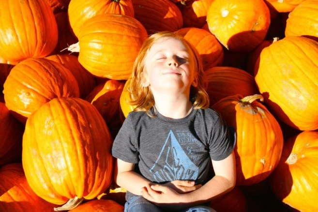 Finn in the pumpkins at Lincoln Gardens Lumsden
