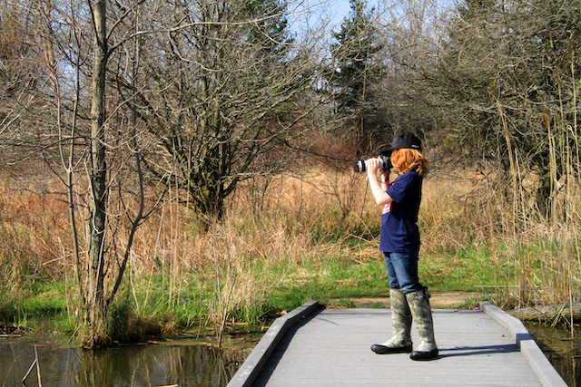 Birdwatching at Hillman Marsh, Leamington, ON Jenn Smith Nelson