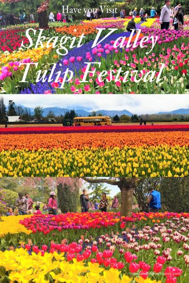 Have you Visit Skagit Valley Tulip Festival, skagit tulip festival bloom status,skagit tulip festival dogs pet not allowed, skagit tulip festival traffic