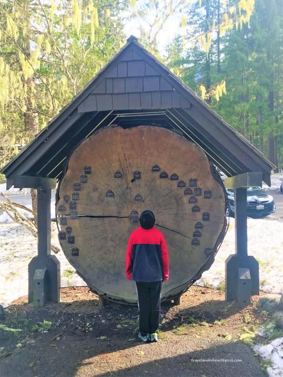 Longmire Musuem- Ancient Wooden Artifact about Timelines of  Park