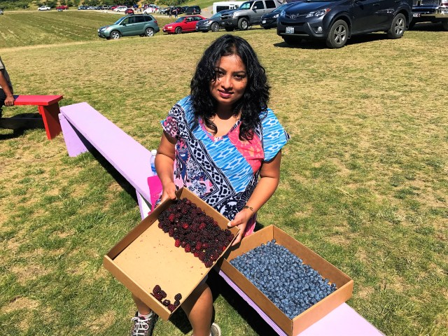 Raspberries, Loganberries blue and black berries at Gray Marsh Berry farm at Lavender Festival in Sequim, Washigton