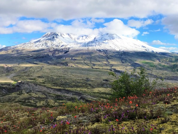 Mount ST Helens with wild flowers bloomed