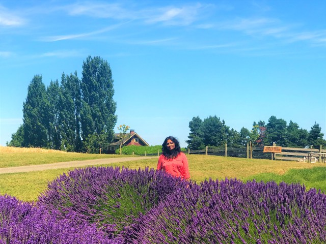 Visit Beautiful Lavender Farms at Sequim Lavender Festival