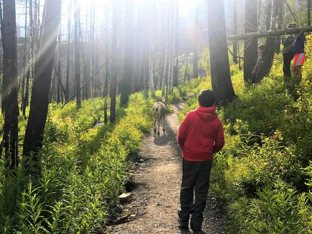 Hike To Baring Falls Glacier National Park