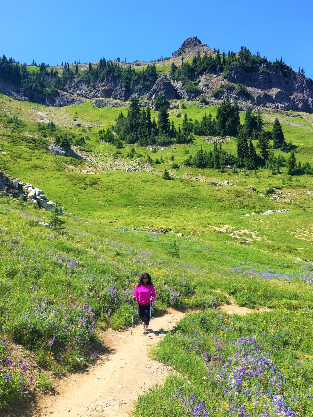 Purple Wildflowers bloomed Pacific crest trail Chinook Pass