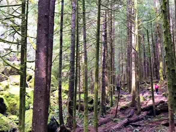 Little Si - Best Hikes near Seattle