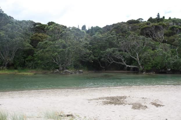 lonely-bay-coromandel NZ