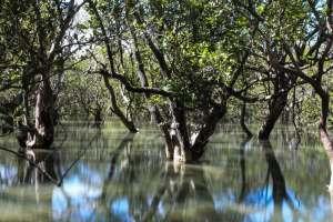 Waitangi-mangrove