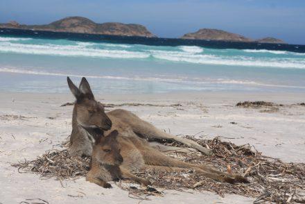 Lucky bay Australie WA