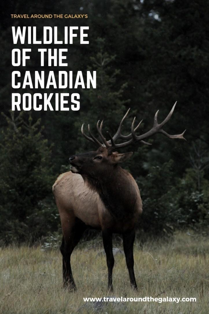 Wildlife of the Canadian Rockies (1)