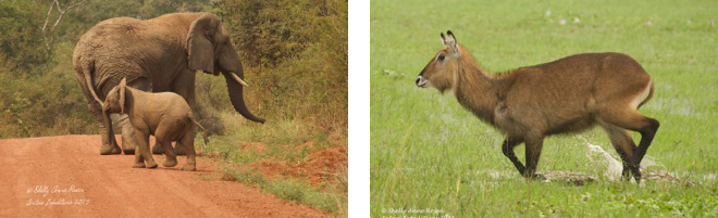 Animals in Akagera National Park.