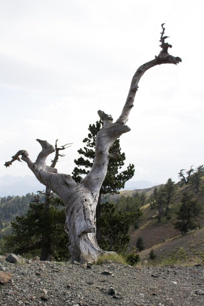 Sławne greckie drzewo reniferowe ;)