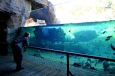 Habitatul peştilor exotici şi raiul hipopotamilor. Privit dintr-o parte a parcului, pare un lac obişnuit. Din cealaltă parte însă, e un imens acvariu.