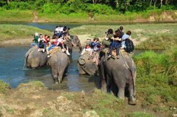 Prin junglă cu elefanții