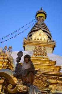 Swayambhunath, supranumit Templul Maimuţelor