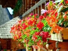 Flori la mănăstire