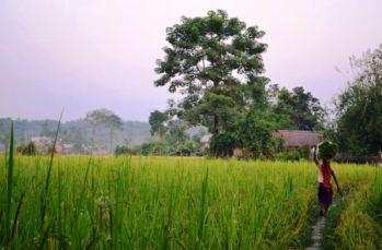 Satul Tharu, aflat la marginea junglei