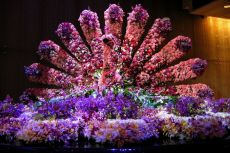 Melbourne - Păun din flori la Crown