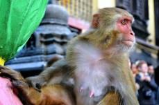 Swayambhunath - se sună adunarea