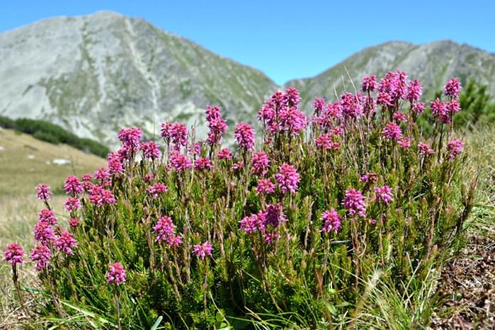 Sesiune foto - flori de munte