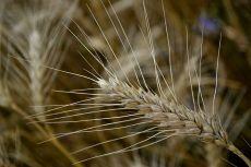 Tabăra de biodiversitate - Frumușani
