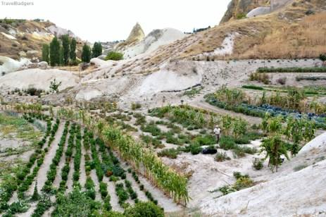 Grădinăritul este o îndeletnicire de bază a locuitorilor din Uçhisar