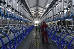 Cum arată o sală de muls ultramodernă