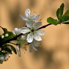 Primăvara în București