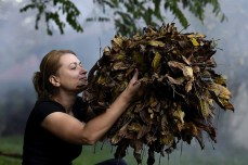 Culesul frunzelor la Golești