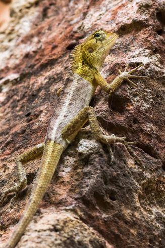 Biodiversitate în jungla vietnameză