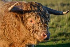 Câte un bou pe drum