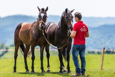 De vorbă cu caii