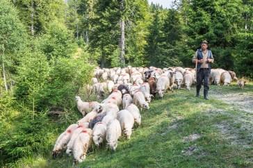 Pastorală