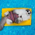 Questions fréquentes sur le chat en vacances