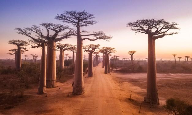 Madagascar et ses ressources touristiques incomparables