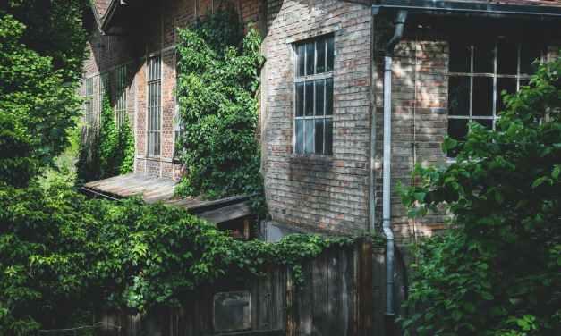 Se protéger du regard indiscret des voisins dans son jardin – 5 solutions