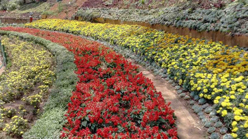 Ooty Botanical Gardens