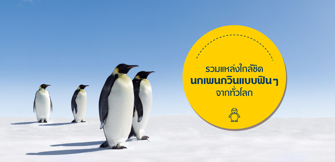 Blog-Penguin-1140x550