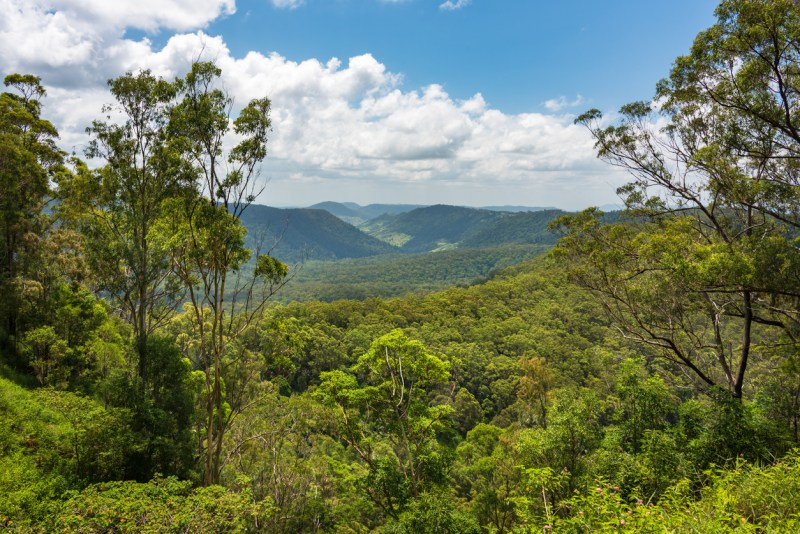 Beautiful panoramic view over tropical rain forest tree canopies