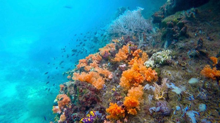 Corals in Southern Waigeo