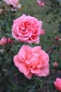 flowers at petrin gardens