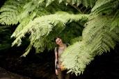 03-NewZealand-wellington-fern-BSP