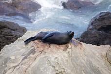 06-NewZealand-Ohau-Seals